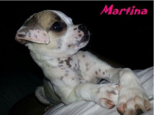 MARTINA - JOLIE MINIATURE - SC - VV RP O C10