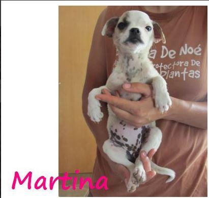 MARTINA - JOLIE MINIATURE - SC - VV RP O E10