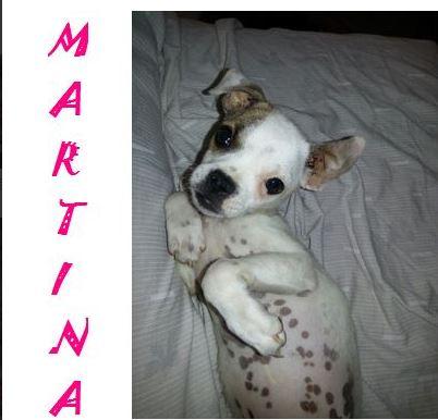 MARTINA - JOLIE MINIATURE - SC - VV RP O R10