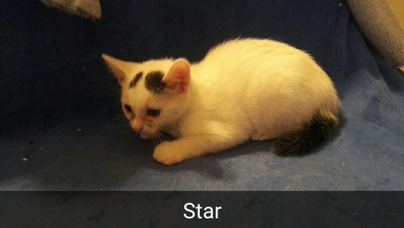 STAR - BLANC ET QUEUE NOIRE - EN FA DANS LE 78 Snapch10