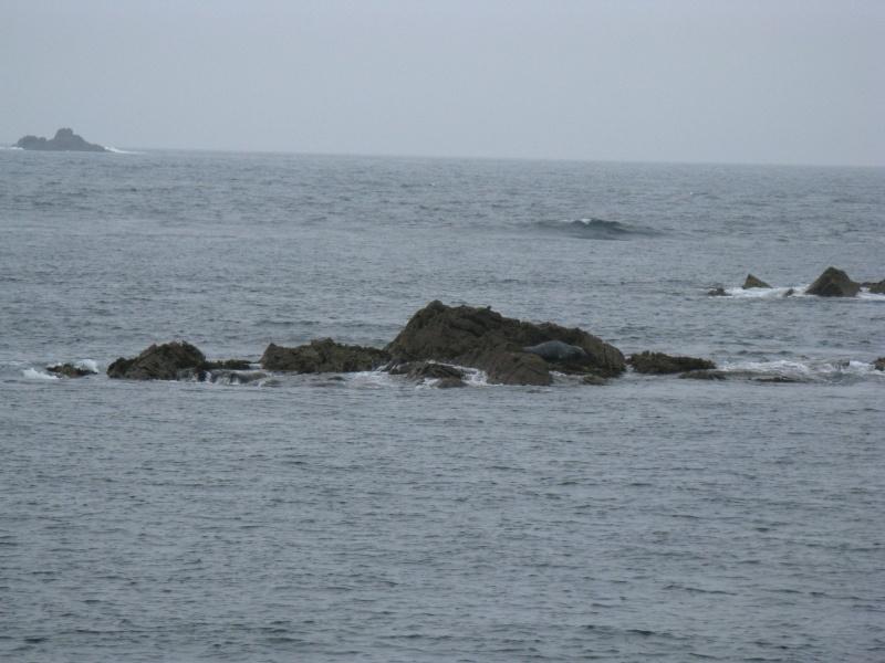 virée aux 7 îles Phoque11