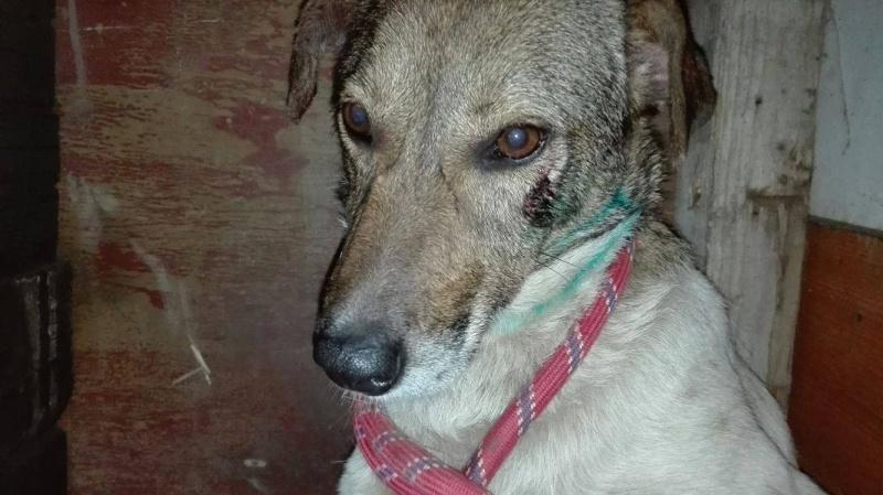 Alba, chienne magnifique, née en 2012 13405310