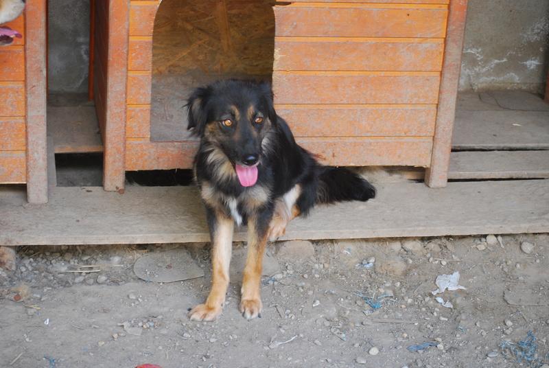 Bonita, femelle née en janvier 2015, taille moyenne  Dsc_1112