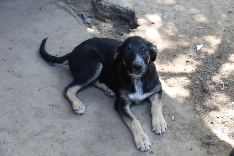 Dakota, petite puce née en avril 2016 Hx9a5633