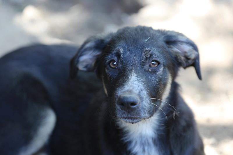 Dakota, petite puce née en avril 2016 Hx9a5635