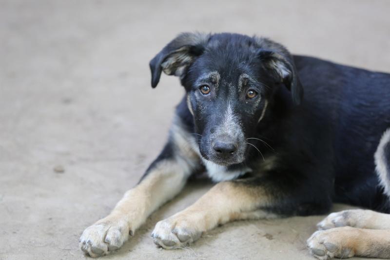 Dakota, petite puce née en avril 2016 Hx9a5637