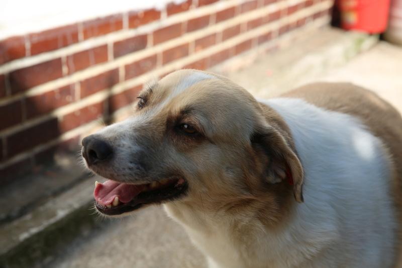 Murmurica, sauvetage de Sanda, chienne née en 2011 Hx9a6612