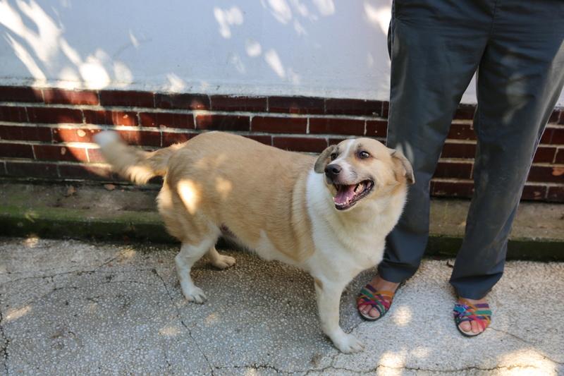 Murmurica, sauvetage de Sanda, chienne née en 2011 Hx9a6613
