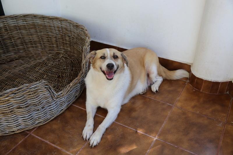 Murmurica, sauvetage de Sanda, chienne née en 2011 Hx9a6614