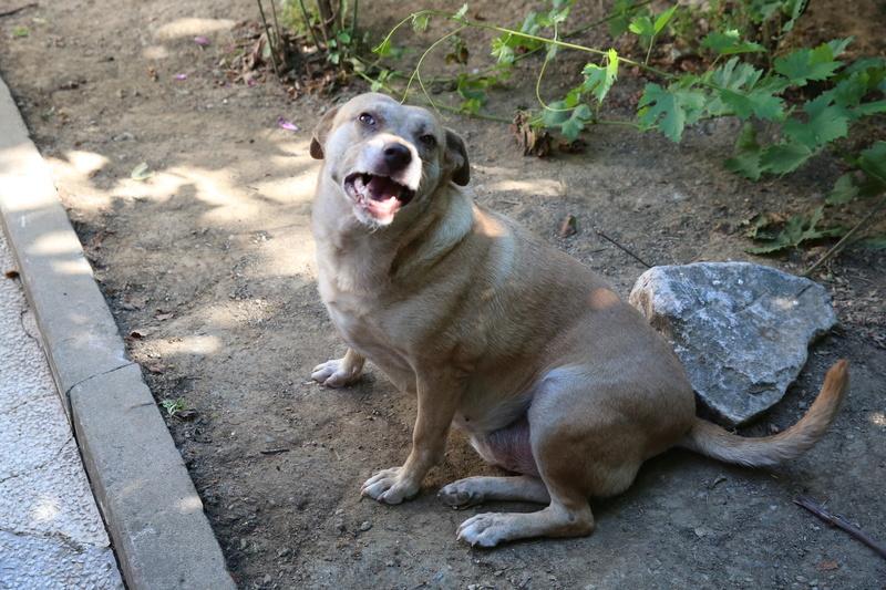 Tina, chienne sauvée de la rue, née en avril 2010  Hx9a6619