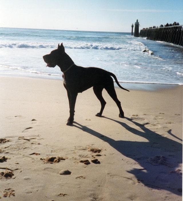 Zeus, plus grand chien du monde ! - Page 2 Cles0011