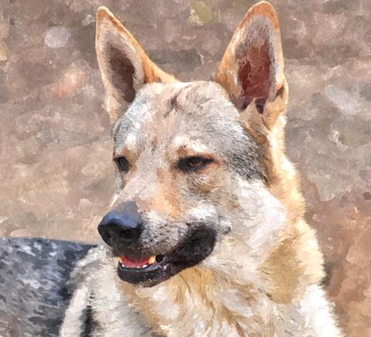 séance photo de ma chienne par un photographe pro, suis-je folle? - Page 2 Fotosk10