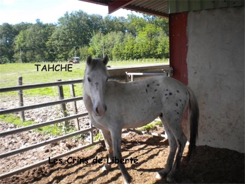 Trés beau poulain original blanc capé Tahche13