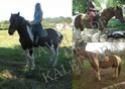 Gentil cheval tobiano - 77 nord Im_ora14