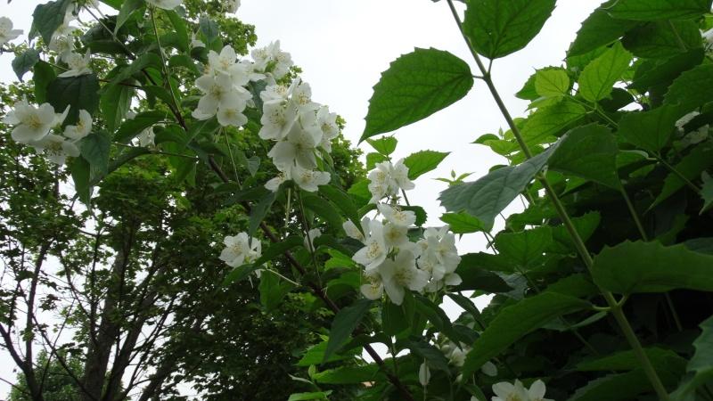 Les fleurs de nos jardins Dsc03810