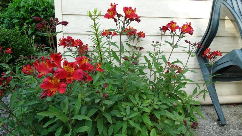 Les fleurs de nos jardins Dsc03812