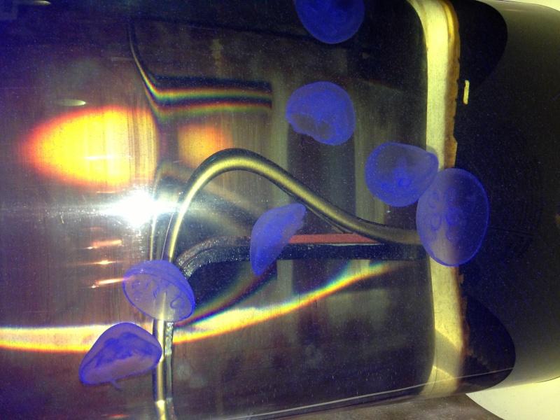 Un aquarium de méduse !!! - Page 2 Image10