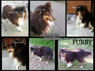 VOL de chien dans le 56 - Furby Furby_10