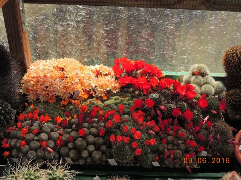 Cacti and Sukkulent in Köln, every day new flowers in the greenhouse Part 145 Bild_116