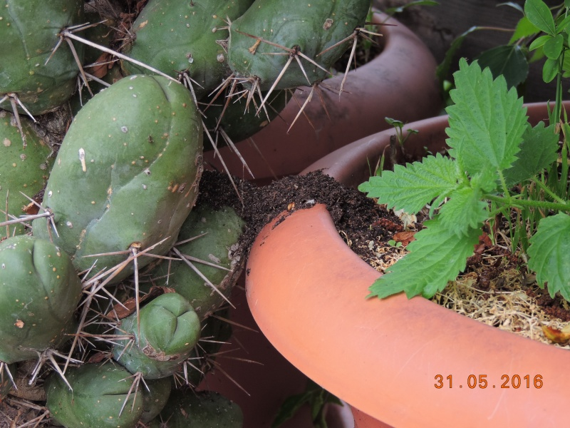 Cacti and Sukkulent in Köln, every day new flowers in the greenhouse Part 145 Bild_122