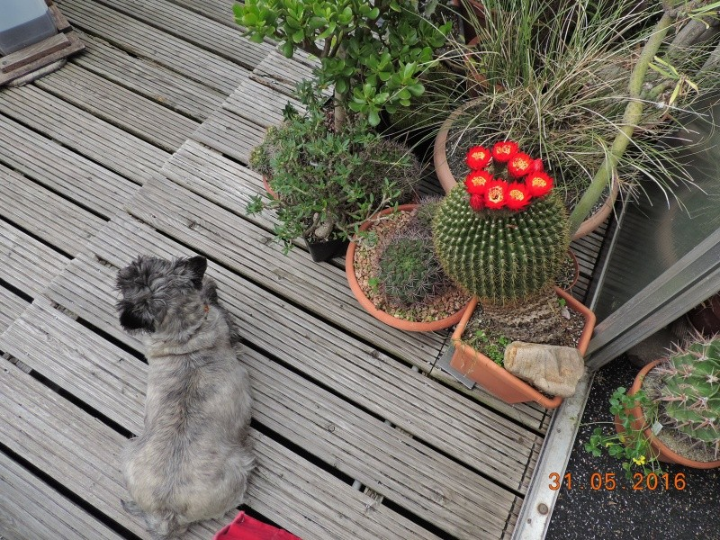Cacti and Sukkulent in Köln, every day new flowers in the greenhouse Part 145 Bild_130