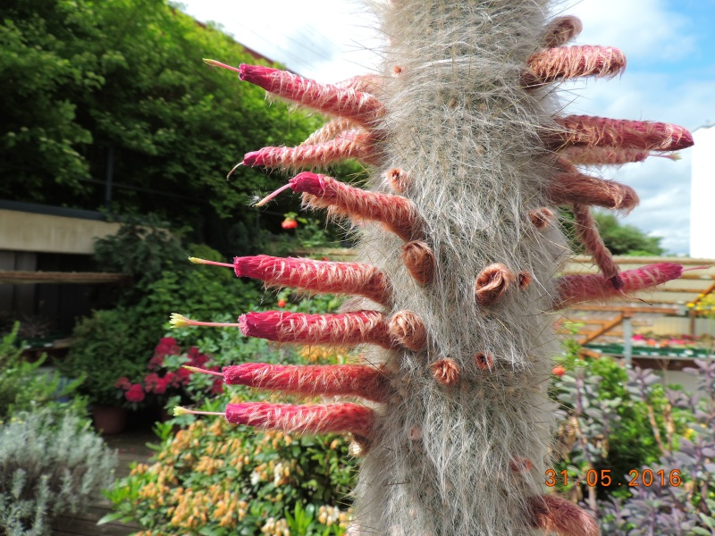 Cacti and Sukkulent in Köln, every day new flowers in the greenhouse Part 145 Bild_134