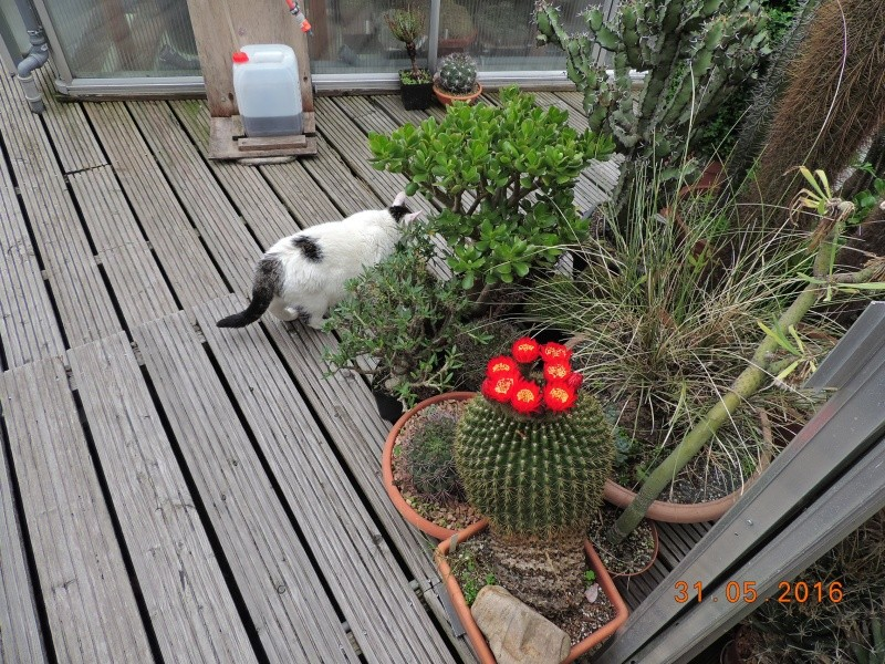 Cacti and Sukkulent in Köln, every day new flowers in the greenhouse Part 145 Bild_160