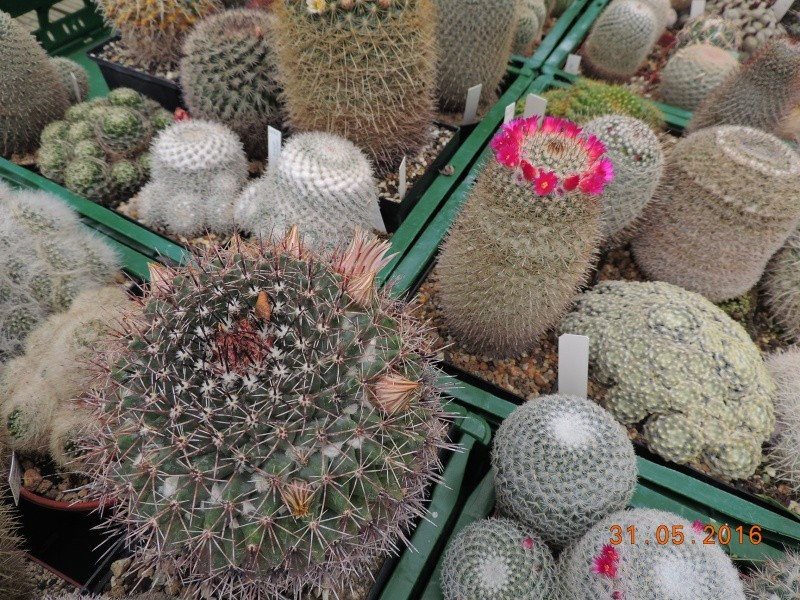 Cacti and Sukkulent in Köln, every day new flowers in the greenhouse Part 145 Bild_200