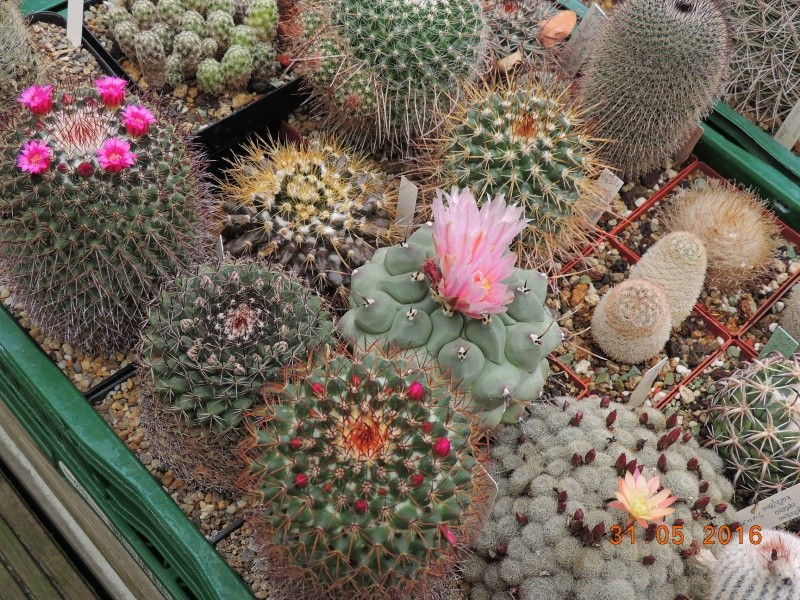 Cacti and Sukkulent in Köln, every day new flowers in the greenhouse Part 145 Bild_201