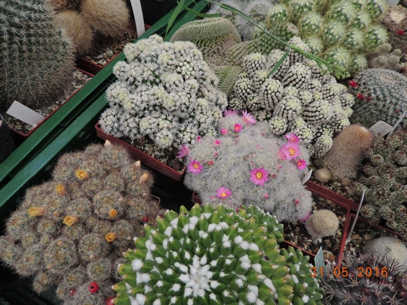 Cacti and Sukkulent in Köln, every day new flowers in the greenhouse Part 145 Bild_204