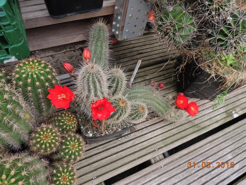 Cacti and Sukkulent in Köln, every day new flowers in the greenhouse Part 145 Bild_206