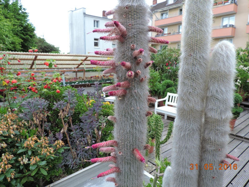 Cacti and Sukkulent in Köln, every day new flowers in the greenhouse Part 146 Bild_283
