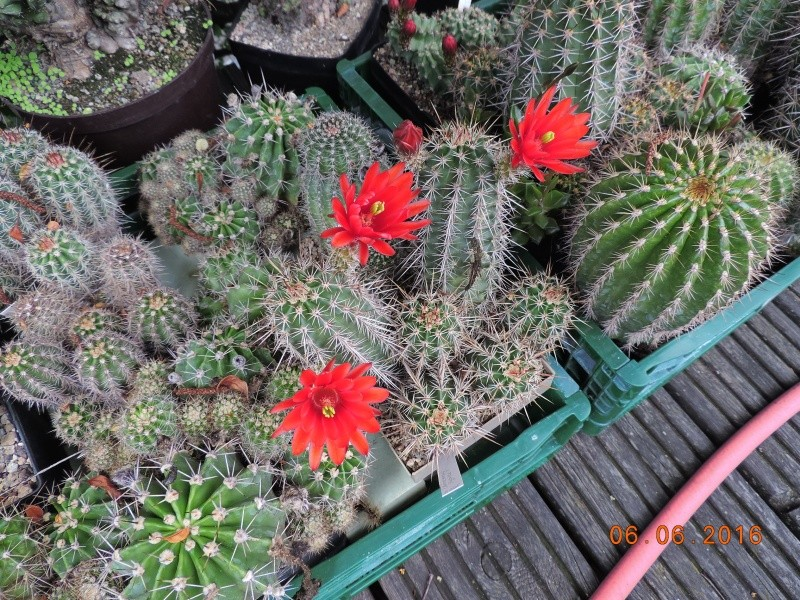 Cacti and Sukkulent in Köln, every day new flowers in the greenhouse Part 146 Bild_315