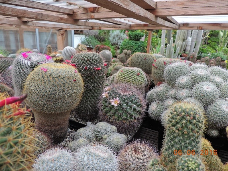 Cacti and Sukkulent in Köln, every day new flowers in the greenhouse Part 146 Bild_374
