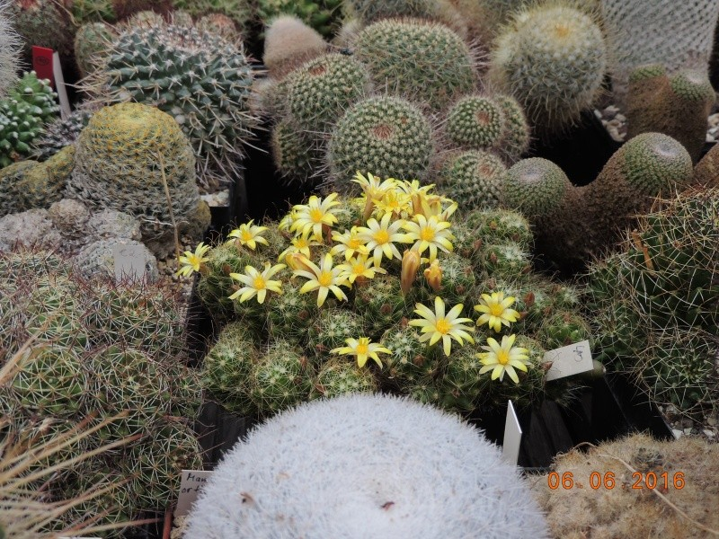 Cacti and Sukkulent in Köln, every day new flowers in the greenhouse Part 146 Bild_379