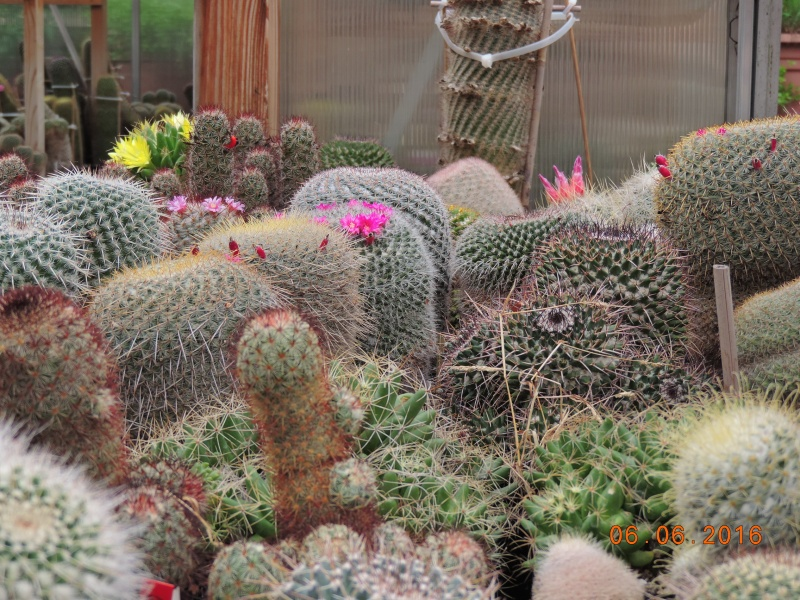 Cacti and Sukkulent in Köln, every day new flowers in the greenhouse Part 146 Bild_382