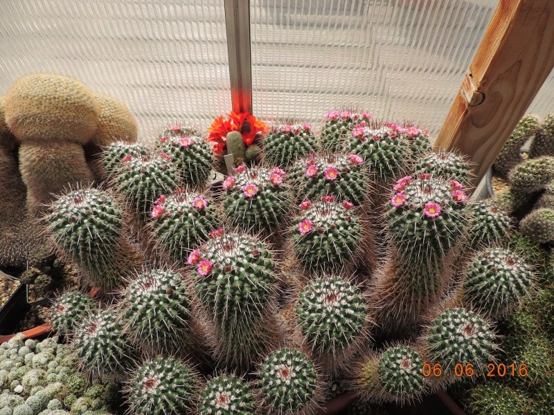 Cacti and Sukkulent in Köln, every day new flowers in the greenhouse Part 146 Bild_387