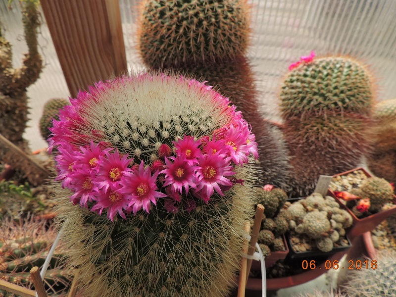 Cacti and Sukkulent in Köln, every day new flowers in the greenhouse Part 146 Bild_388