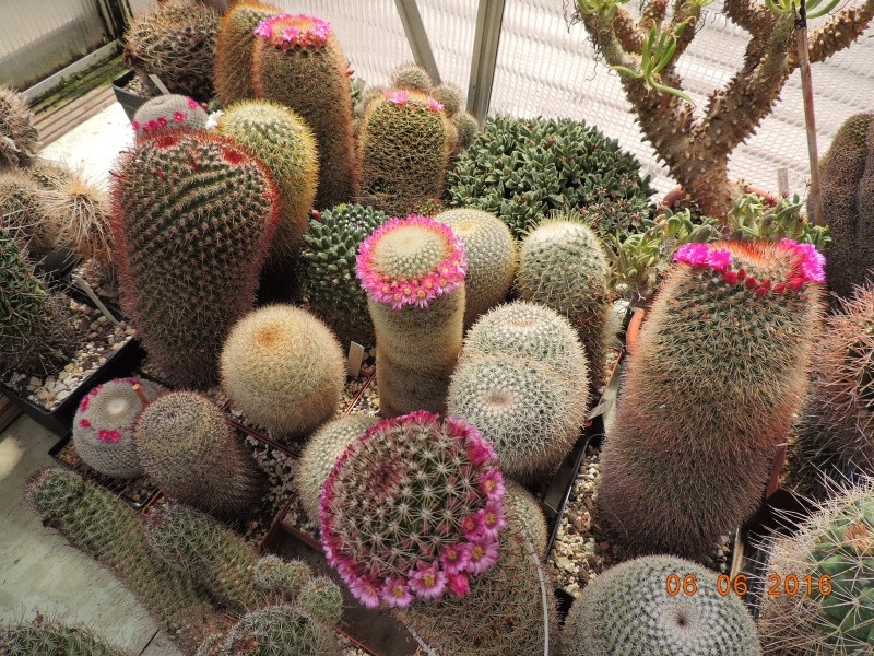 Cacti and Sukkulent in Köln, every day new flowers in the greenhouse Part 146 Bild_389