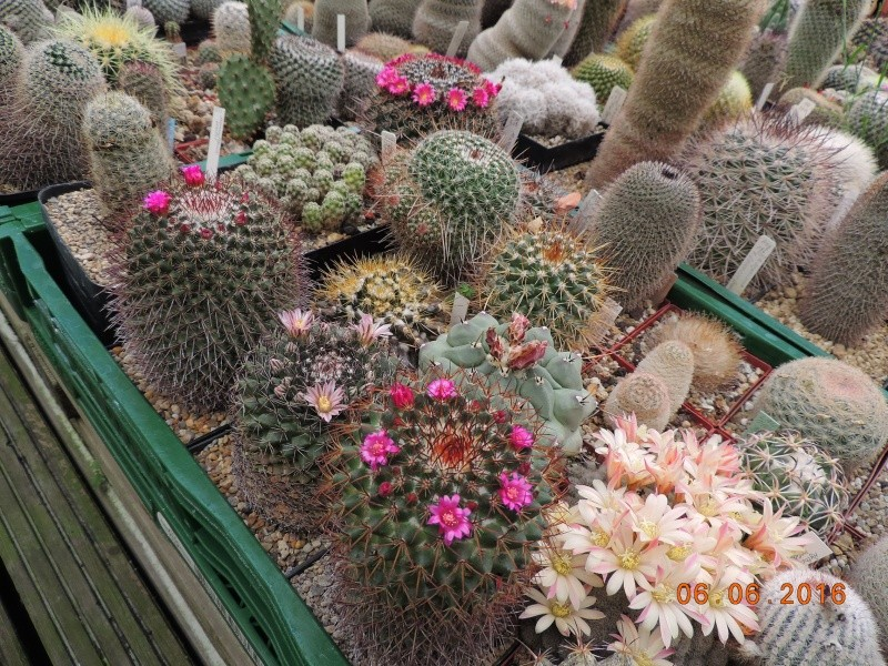 Cacti and Sukkulent in Köln, every day new flowers in the greenhouse Part 147 Bild_397
