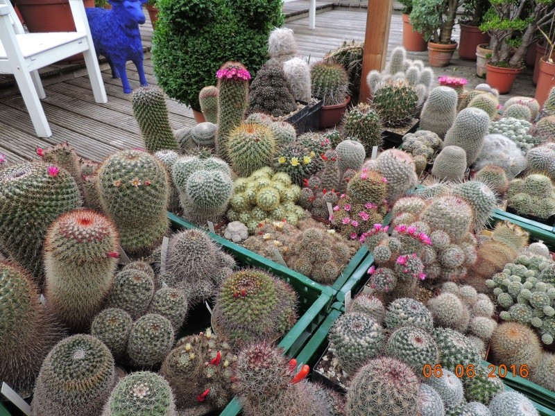 Cacti and Sukkulent in Köln, every day new flowers in the greenhouse Part 147 Bild_400