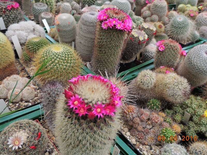 Cacti and Sukkulent in Köln, every day new flowers in the greenhouse Part 147 Bild_406