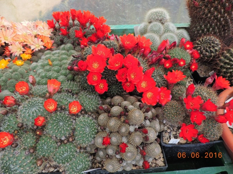 Cacti and Sukkulent in Köln, every day new flowers in the greenhouse Part 147 Bild_409