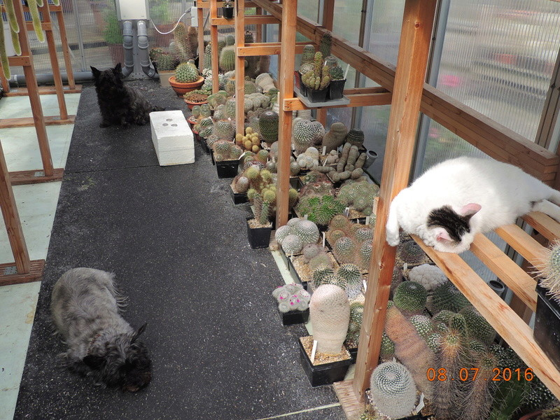 Cacti and Sukkulent in Köln, every day new flowers in the greenhouse Part 147 Bild_531