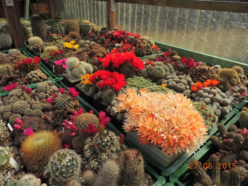 Cacti and Sukkulent in Köln, every day new flowers in the greenhouse Part 145 Bild_910
