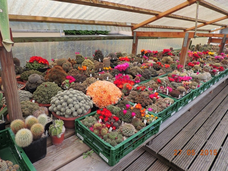 Cacti and Sukkulent in Köln, every day new flowers in the greenhouse Part 145 Bild_913