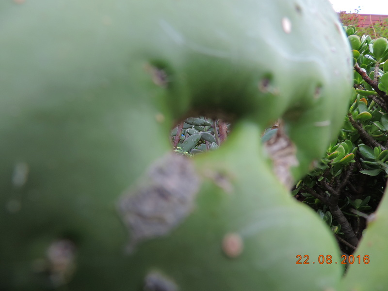 Cacti and Sukkulent in Köln, every day new flowers in the greenhouse Part 149 Bild_936