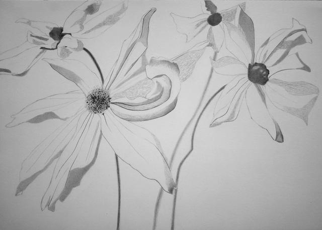 Fleurs  P1040020