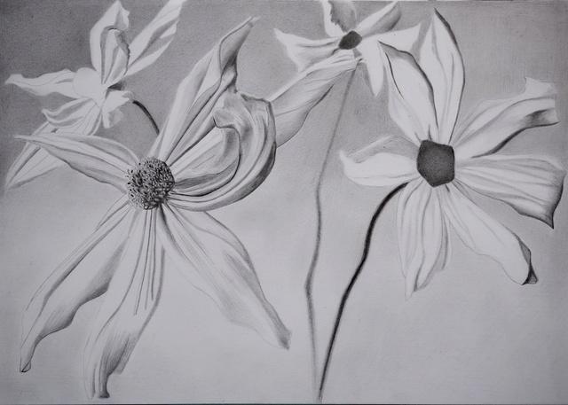 Fleurs  P1040024