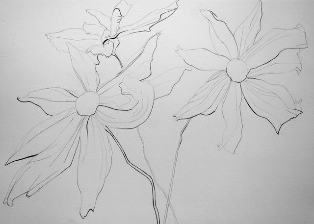 Fleurs  P1040025